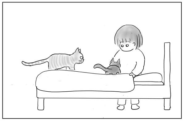 ベッドに乗った猫