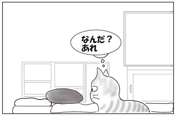クッションを見つけた猫