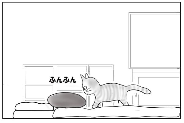 クッションの匂いを嗅ぐ猫
