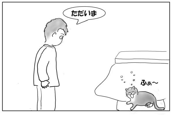 素っ気ない猫