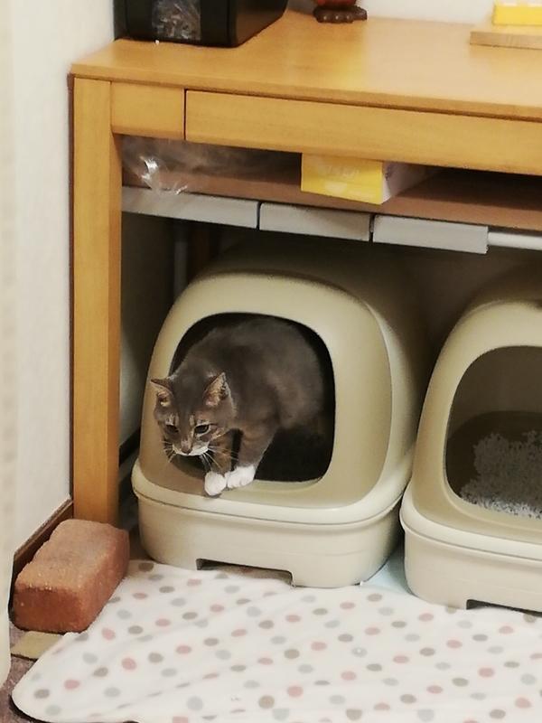 トイレから出る猫
