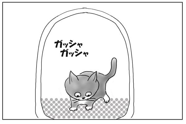 猫砂をかきまわす猫