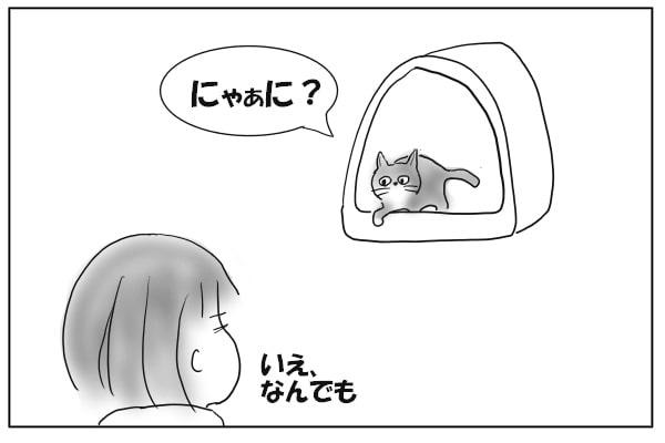猫と目が合う