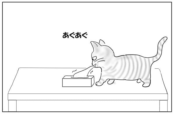 ティッシュをいたずらする猫