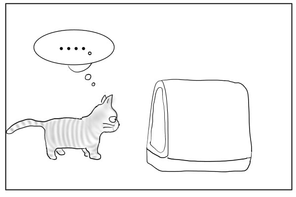 トイレを見つめる猫