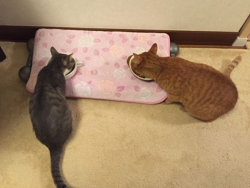 並んでごはんを食べる猫