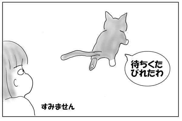 先を歩く猫