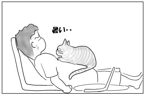 腹に乗る猫
