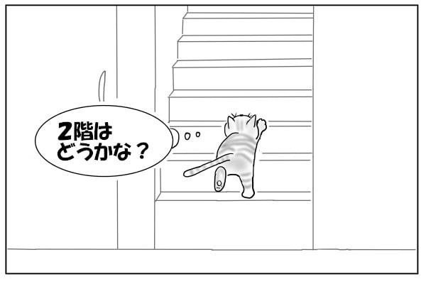 階段をのぼる猫