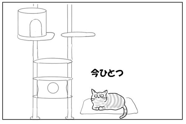 クールベッドに乗る猫