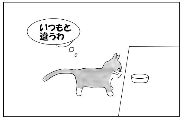怪訝な表情の猫