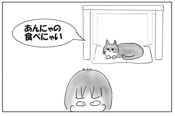 拒絶する猫