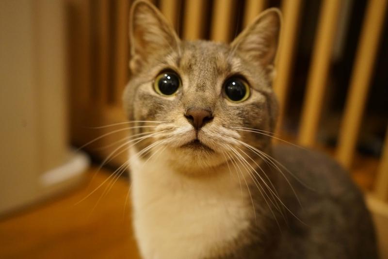 猫どアップ