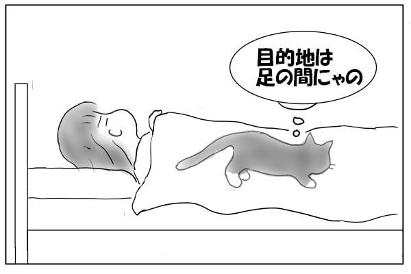 猫の目的地