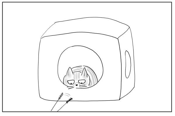 飽きっぽい猫