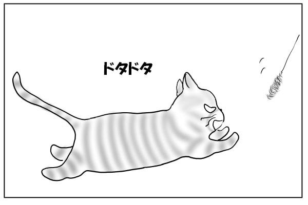 ドタドタと走る猫