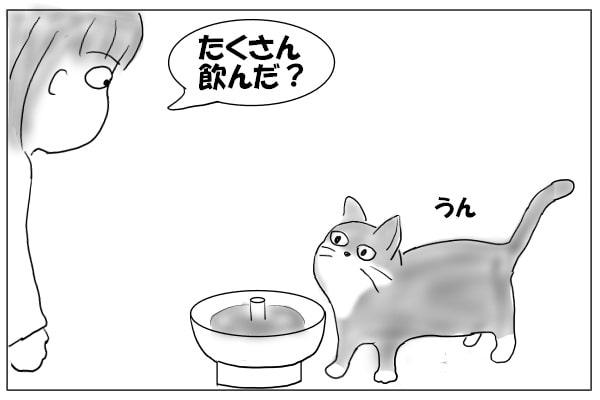 猫に尋ねる人