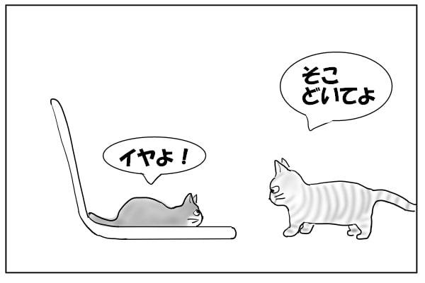 椅子に乗りたい猫