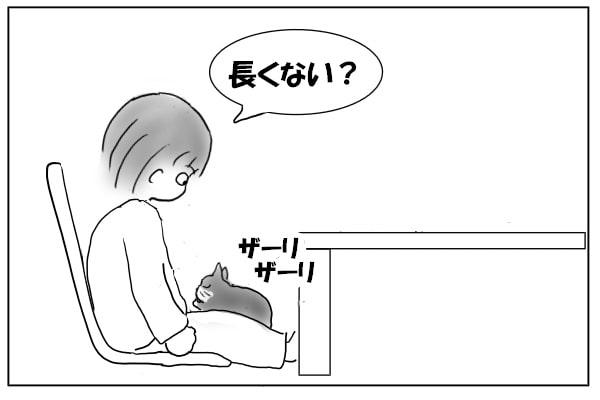 膝の上で毛づくろい
