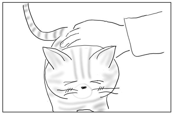 ゴロゴロ言う猫