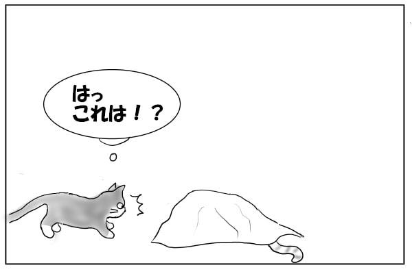 忍びよる猫