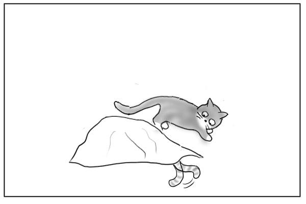 まわりこむ猫