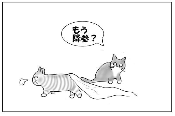 出てきた猫