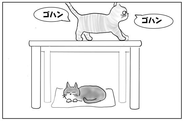 テーブルに乗った猫