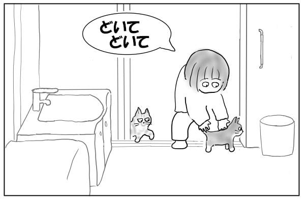 入れ替わりで入ってくる猫