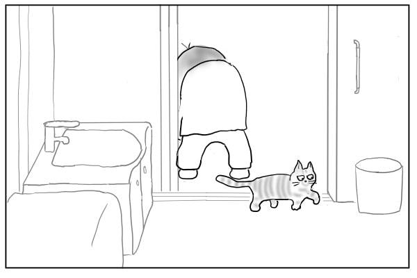 入ってきた猫