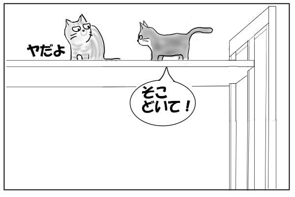 どいて欲しい猫