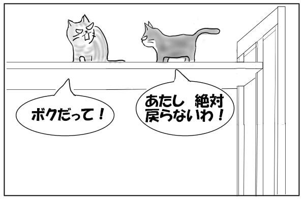 引き下がらない猫たち
