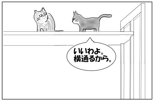 我を張る猫