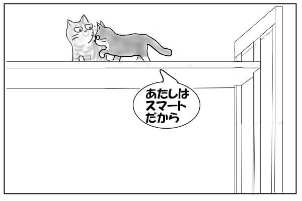 むりやり突き進む猫