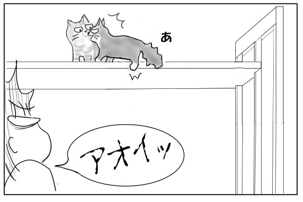 足を踏み外す猫