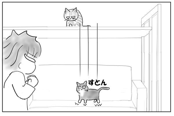落下した猫