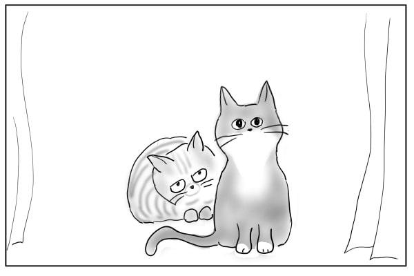 不思議そうに見る猫