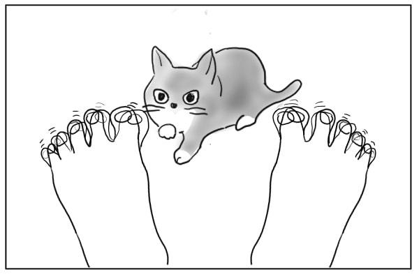 近づいた猫