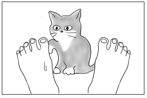 猫パンチ後の猫