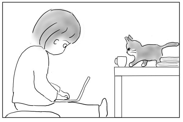 やってきた猫