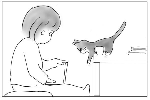 膝に乗りたがる猫