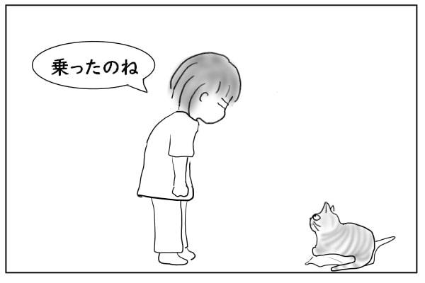 上着に乗ってる猫