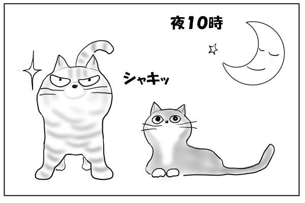 夜の猫たち
