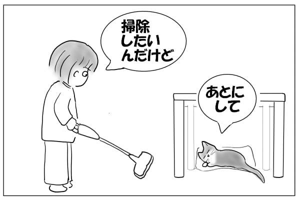 イヤそうな猫