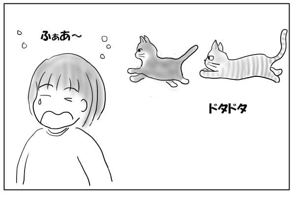 追いかけっこする猫たち