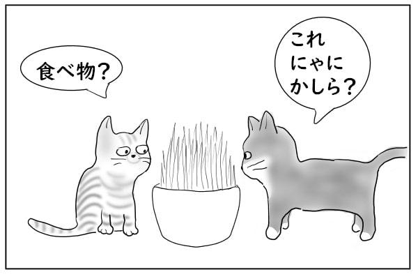 猫草に興味を持つ猫