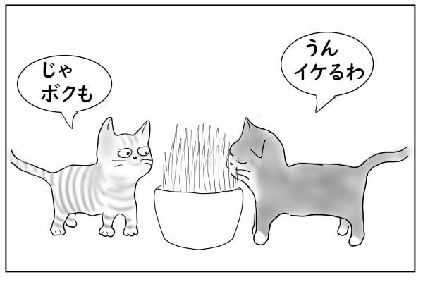気に入った猫