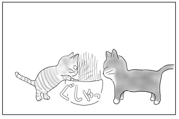 鉢を踏み荒らす猫