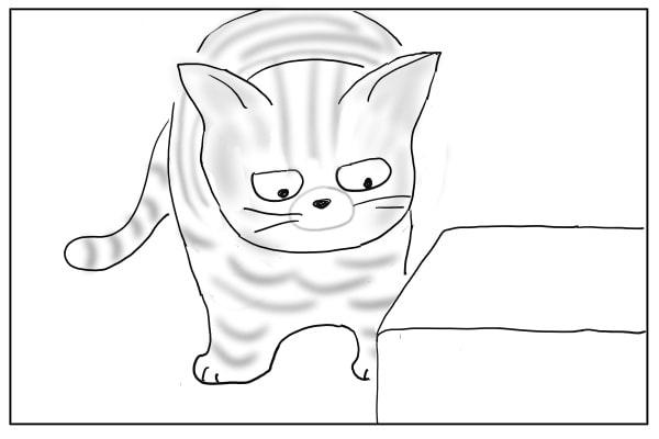 箱と出会った猫