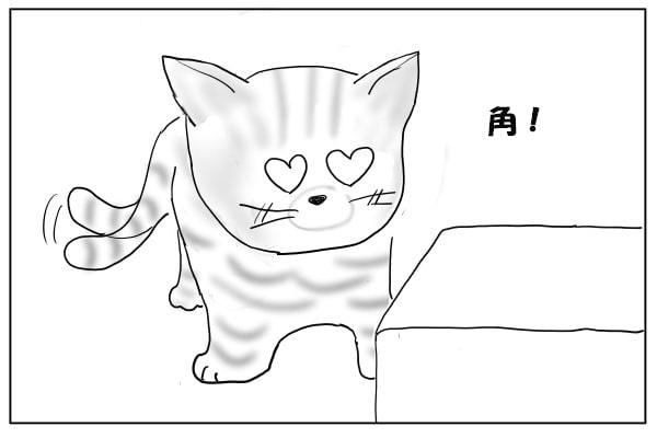 角好きな猫
